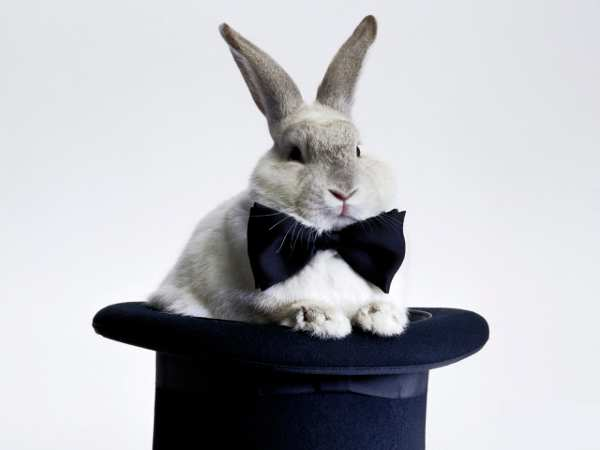LEADER - prestigiatore coniglio