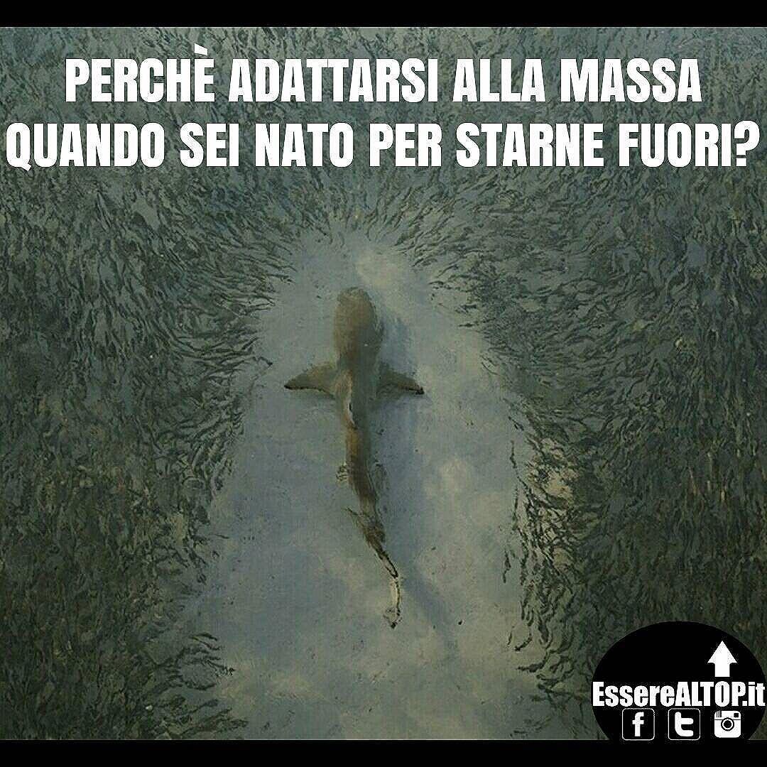 Sfondo motivante squalo