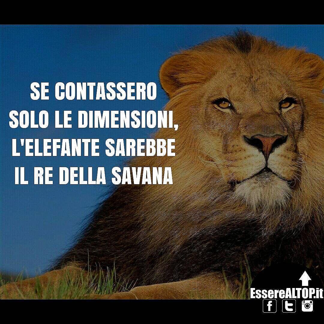 """Qualunque sia la tua """"dimensione"""" attuale, tira fuori il leone che è in te! ??"""